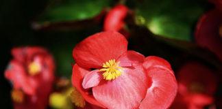 Rośliny jako istotny element dekoracji wnętrz