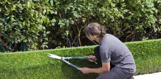 Zaprojektuj ogród
